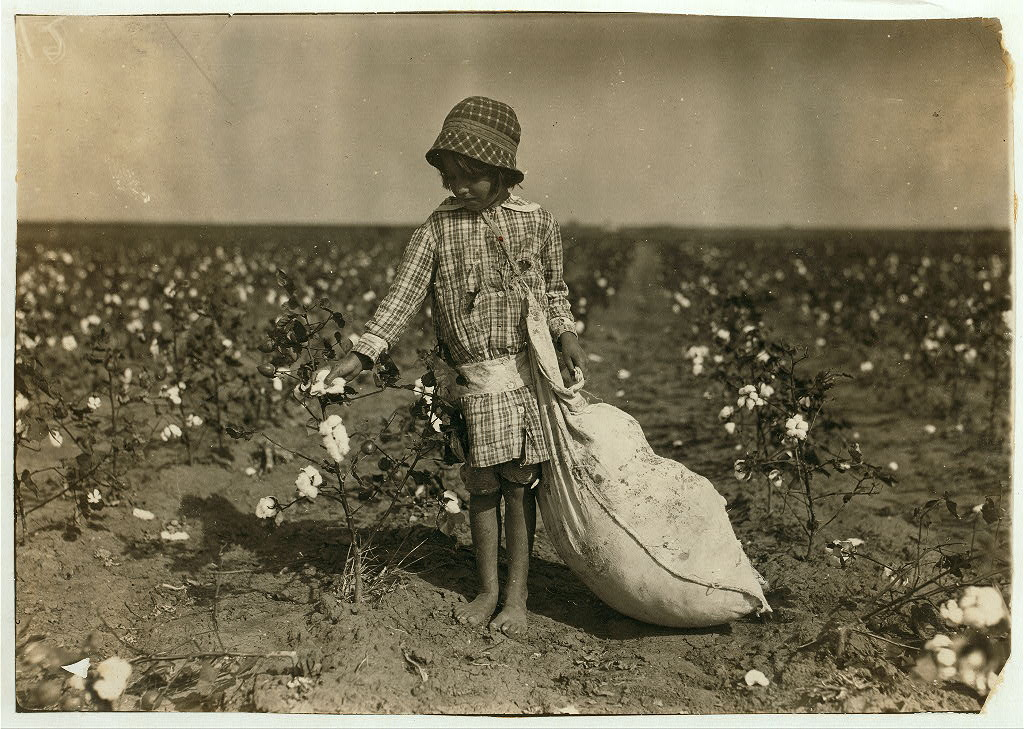 Photograph of a young girl picking cotton.