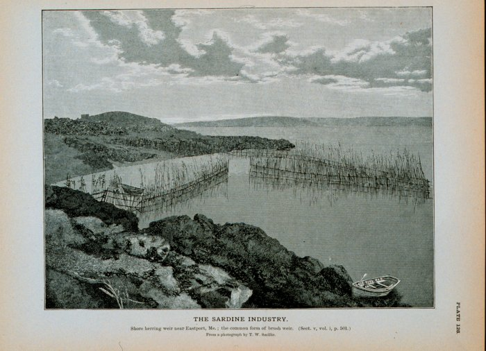 Illustration of a fishing weir used in the sardine industry.