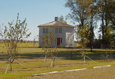 Photograph of the Octagon House with the Mattamuskeet Apple orchard, 2016. Image from the Octagon House historic site. Used by permission.