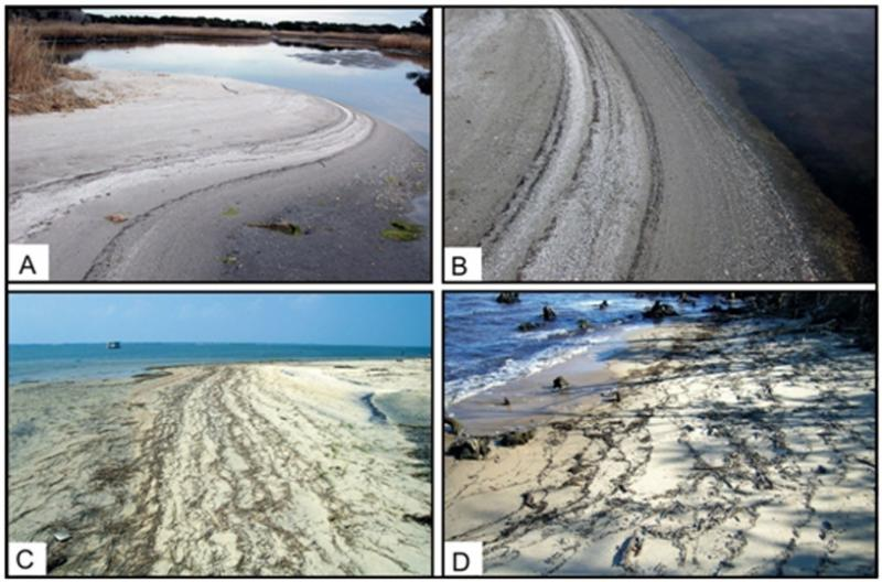 """<img typeof=""""foaf:Image"""" src=""""http://statelibrarync.org/learnnc/sites/default/files/images/1_18.jpg"""" width=""""816"""" height=""""539"""" alt=""""Photographs of different shore zones"""" title=""""Photographs of different shore zones"""" />"""
