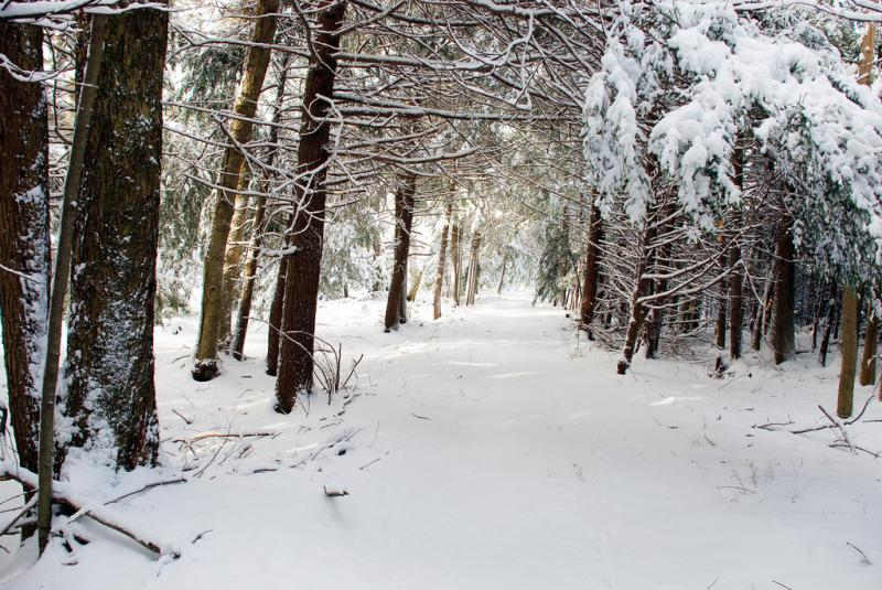 Trail through snowy woods