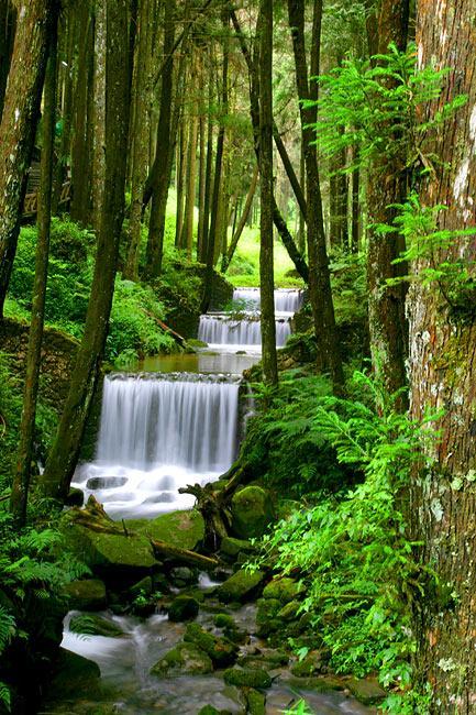 "<img typeof=""foaf:Image"" src=""http://statelibrarync.org/learnnc/sites/default/files/images/alishanwaterfall.jpg"" width=""433"" height=""650"" alt=""Alishan waterfall"" title=""Alishan waterfall"" />"