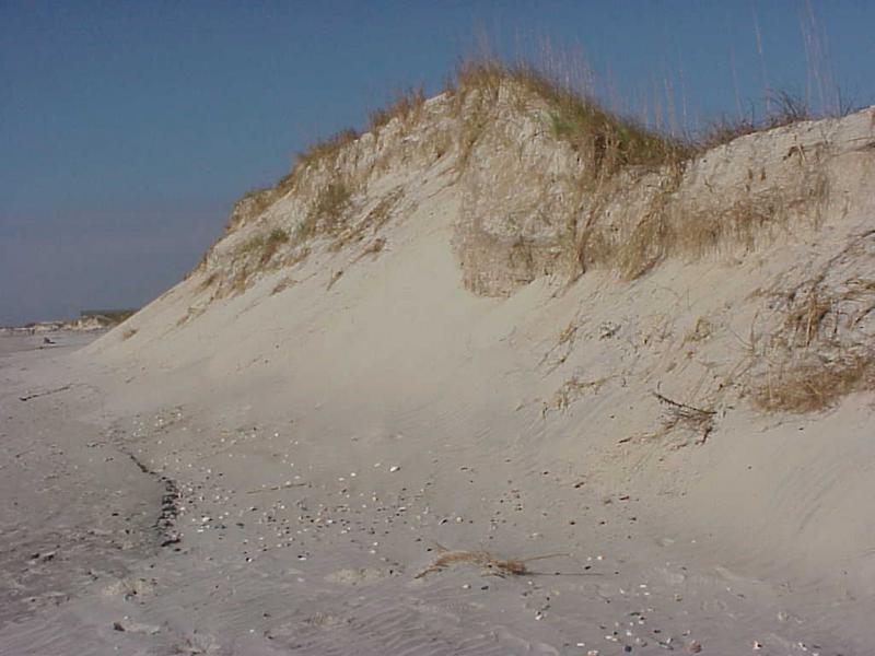 "<img typeof=""foaf:Image"" src=""http://statelibrarync.org/learnnc/sites/default/files/images/beachfront_dune.jpg"" width=""1024"" height=""768"" alt=""Beachfront dune"" title=""Beachfront dune"" />"