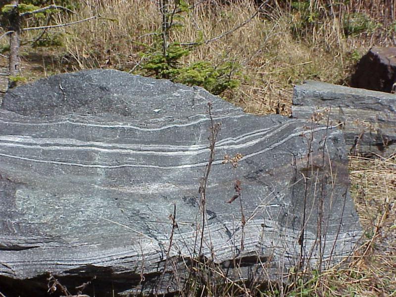 "<img typeof=""foaf:Image"" src=""http://statelibrarync.org/learnnc/sites/default/files/images/boulder_roan.jpg"" width=""1024"" height=""768"" alt=""A boulder of Roan Mountain gneiss"" title=""A boulder of Roan Mountain gneiss"" />"
