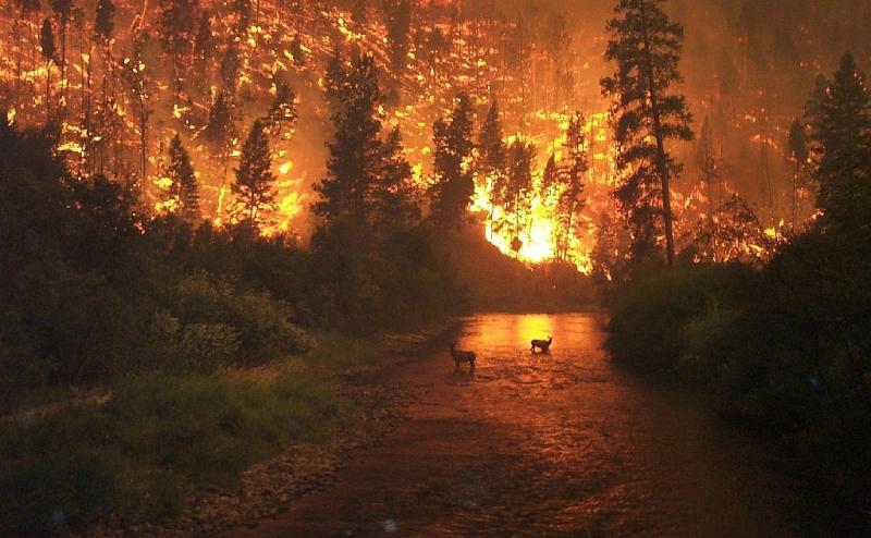 "<img typeof=""foaf:Image"" src=""http://statelibrarync.org/learnnc/sites/default/files/images/deerfire.jpg"" width=""1023"" height=""632"" alt=""deer flee a wildfire"" />"