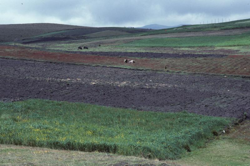 """<img typeof=""""foaf:Image"""" src=""""http://statelibrarync.org/learnnc/sites/default/files/images/ecuador_011.jpg"""" width=""""1024"""" height=""""682"""" alt=""""Farmland in Ecuador"""" title=""""Farmland in Ecuador"""" />"""