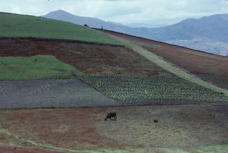 """<img typeof=""""foaf:Image"""" src=""""http://statelibrarync.org/learnnc/sites/default/files/images/ecuador_207.jpg"""" width=""""1024"""" height=""""686"""" alt=""""Patchwork of agricultural plots on a hillside outside Riobamba, Ecuador"""" title=""""Patchwork of agricultural plots on a hillside outside Riobamba, Ecuador"""" />"""