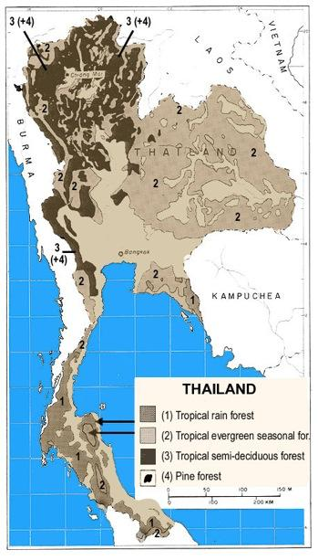 """<img typeof=""""foaf:Image"""" src=""""http://statelibrarync.org/learnnc/sites/default/files/images/forest_growth_thailand.jpg"""" width=""""349"""" height=""""613"""" alt=""""Forest growth in Thailand"""" title=""""Forest growth in Thailand"""" />"""