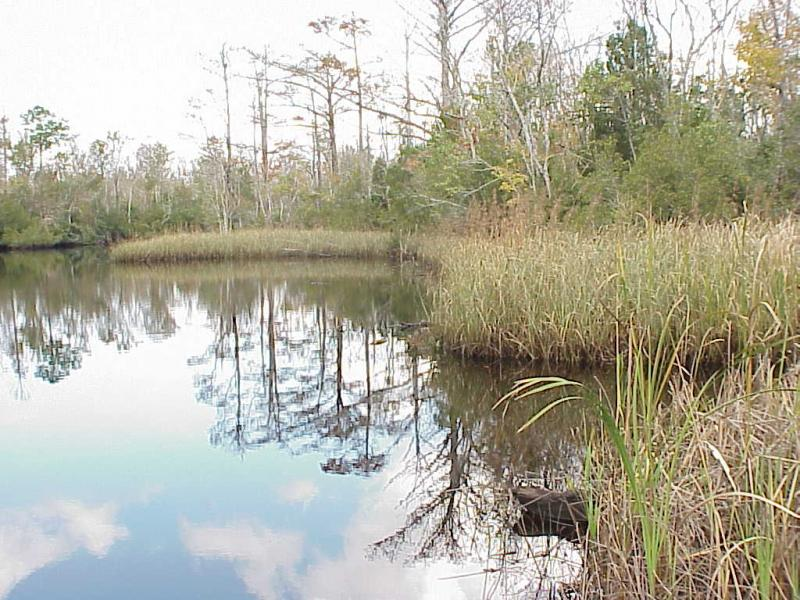 """<img typeof=""""foaf:Image"""" src=""""http://statelibrarync.org/learnnc/sites/default/files/images/freshwater_marsh.jpg"""" width=""""1024"""" height=""""768"""" alt=""""Freshwater marsh and swamp forest; tidal freshwater section"""" title=""""Freshwater marsh and swamp forest; tidal freshwater section"""" />"""