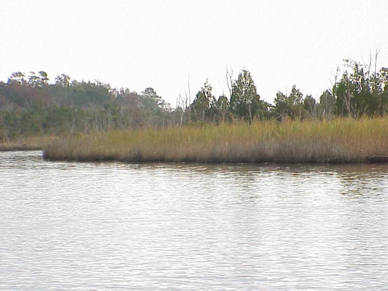 """<img typeof=""""foaf:Image"""" src=""""http://statelibrarync.org/learnnc/sites/default/files/images/freshwater_marsh2.jpg"""" width=""""1024"""" height=""""768"""" alt=""""Freshwater marsh and pioneer forest trees; fresh/salt transition"""" />"""