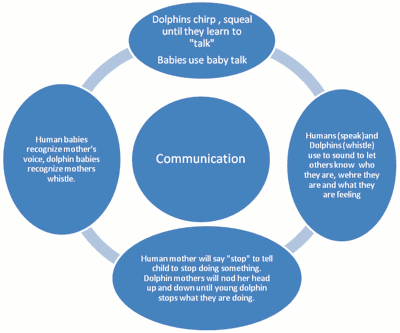 """<img typeof=""""foaf:Image"""" src=""""http://statelibrarync.org/learnnc/sites/default/files/images/humandolphincommunication.png"""" width=""""400"""" height=""""333"""" alt=""""Diagram comparing human and dolphin communication"""" title=""""Diagram comparing human and dolphin communication"""" />"""