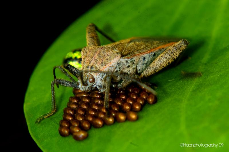 """<img typeof=""""foaf:Image"""" src=""""http://statelibrarync.org/learnnc/sites/default/files/images/insectegg.jpg"""" width=""""1024"""" height=""""681"""" alt=""""insect and its eggs"""" title=""""insect and its eggs"""" />"""
