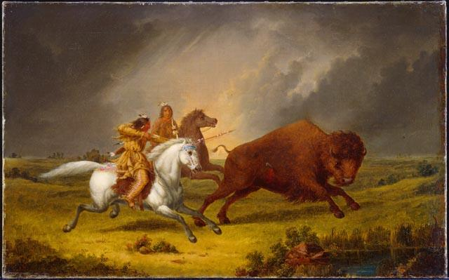 "<img typeof=""foaf:Image"" src=""http://statelibrarync.org/learnnc/sites/default/files/images/kane_assiniboine_hunting_buffalo.jpeg"" width=""640"" height=""399"" alt=""Assiniboine hunting buffalo"" title=""Assiniboine hunting buffalo"" />"