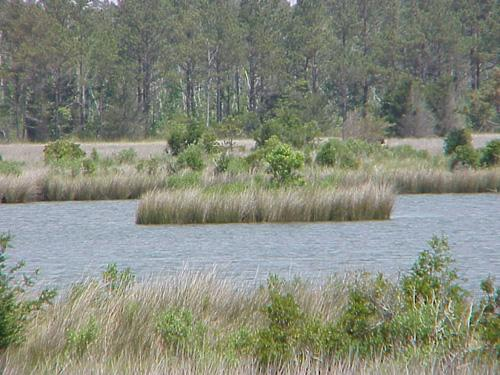 "<img typeof=""foaf:Image"" src=""http://statelibrarync.org/learnnc/sites/default/files/images/marsh_flooded.jpg"" width=""500"" height=""375"" alt=""Flooded marsh-Carteret County"" title=""Flooded marsh-Carteret County"" />"