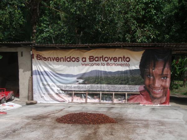 """<img typeof=""""foaf:Image"""" src=""""http://statelibrarync.org/learnnc/sites/default/files/images/p7080579r_600.jpg"""" width=""""600"""" height=""""450"""" alt=""""Cacao plantation, Barlovento, Venezuela"""" title=""""Cacao plantation, Barlovento, Venezuela"""" />"""