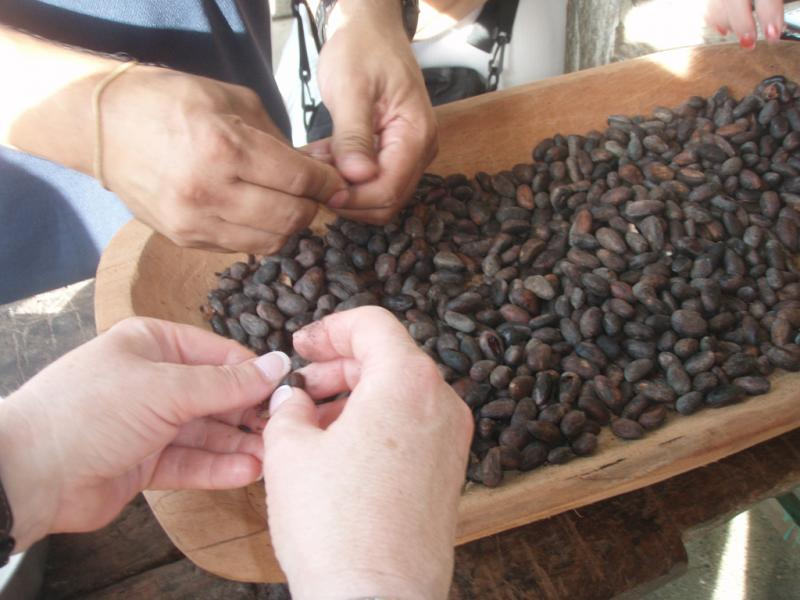 """<img typeof=""""foaf:Image"""" src=""""http://statelibrarync.org/learnnc/sites/default/files/images/p7080628r.jpg"""" width=""""1024"""" height=""""768"""" alt=""""Winnowing cacao seeds (close-up)"""" title=""""Winnowing cacao seeds (close-up)"""" />"""