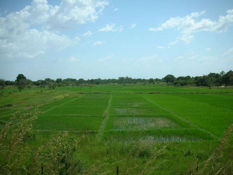 """<img typeof=""""foaf:Image"""" src=""""http://statelibrarync.org/learnnc/sites/default/files/images/rice_field.jpg"""" width=""""1024"""" height=""""768"""" alt=""""Rice field"""" title=""""Rice field"""" />"""