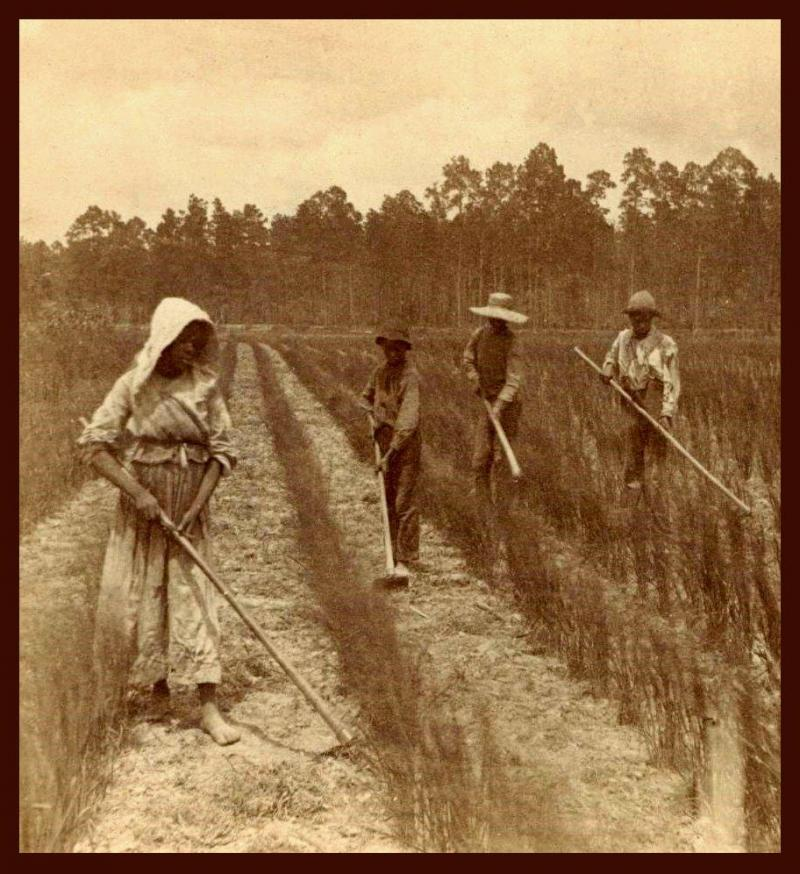 """<img typeof=""""foaf:Image"""" src=""""http://statelibrarync.org/learnnc/sites/default/files/images/rice_field_slaves.jpg"""" width=""""912"""" height=""""996"""" alt=""""Georgia rice field workers"""" title=""""Georgia rice field workers"""" />"""