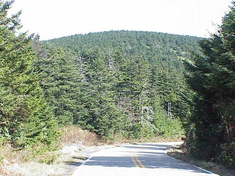 "<img typeof=""foaf:Image"" src=""http://statelibrarync.org/learnnc/sites/default/files/images/spruce_forest.jpg"" width=""1024"" height=""768"" alt=""Mature spruce-fir forest"" title=""Mature spruce-fir forest"" />"