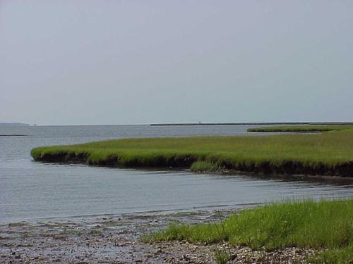 "<img typeof=""foaf:Image"" src=""http://statelibrarync.org/learnnc/sites/default/files/images/subtidal_seafloor.jpg"" width=""500"" height=""375"" alt=""Subtidal seafloor-Carteret County"" title=""Subtidal seafloor-Carteret County"" />"