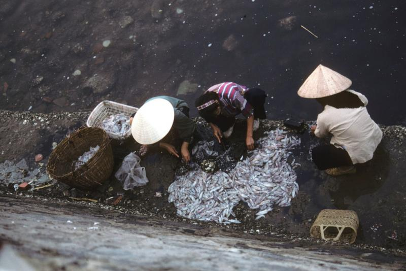 """<img typeof=""""foaf:Image"""" src=""""http://statelibrarync.org/learnnc/sites/default/files/images/vietnam_027.jpg"""" width=""""1024"""" height=""""683"""" alt=""""Overhead view of three women processing fish catch at Cat Ba harbor"""" title=""""Overhead view of three women processing fish catch at Cat Ba harbor"""" />"""