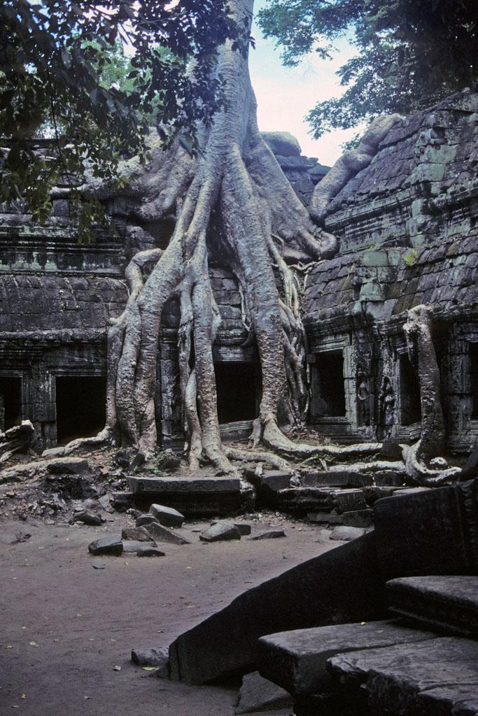 "<img typeof=""foaf:Image"" src=""http://statelibrarync.org/learnnc/sites/default/files/images/vietnam_230.jpg"" width=""683"" height=""1024"" alt=""Tangled roots of tree grow over building at Ta Prohm"" title=""Tangled roots of tree grow over building at Ta Prohm"" />"