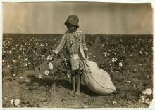 A six year-old girl picking cotton