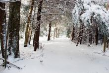 Trail through snowy woods