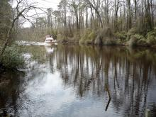 Dismal Swamp Canal