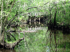 Moores Creek Bridge photo
