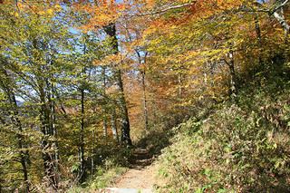 """Appalachian Trail near Newfound Gap, Great Smoky Mountains Nationalpark, Tennessee-North Carolina state line."" Image courtesy of Flickr user Frank Kehran."