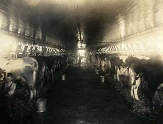 Dairy at the Stonewall Jackson Training School, 1920-1930. Image from the North Carolina Museum of History.