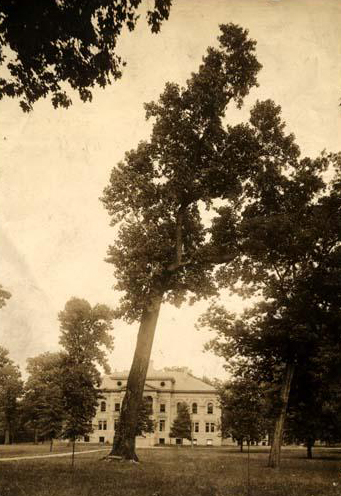 Photograph of the Davie Poplar, 1900. Image from the North Carolina Museum of History.