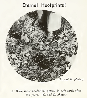 "Eternal Hoofprints or the Devil's Horse's Hoofprints. Image from the 1927 ""North Carolina Today."" From the North Carolina Dept. of Conservation and Development."