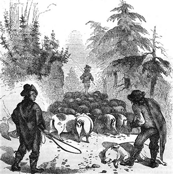 'Hog Drovers,' illustration from Harper's Magazine, 1857. Image from Google Books.