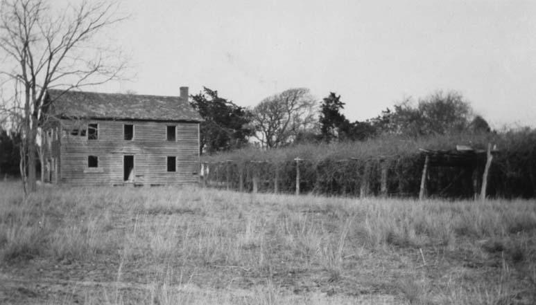 Photograph of the Mother Vineyard, Roanoke Island, 1930, showing the vines supported by wooden structures. Image from the North Carolina Museum of History.