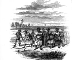Slaves Planting Rice. Image courtesy of the North Carolina State Archives, call #: N_77_7_4, Raleigh, NC.