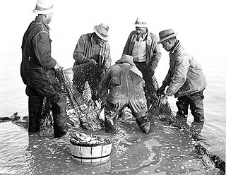 Coastal Region. Brickle, Edenton, Shad and Herring fishing, ca. 1935-1940. Image courtesy of State Archives of NC.