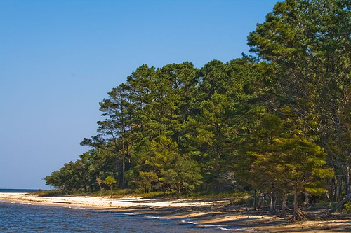 """Forest Meets River, Croatan National Forest, North Carolina."" Image courtesy of LollyKnit."