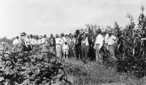 Members of the Stanly County farm tour examining corn, soybeans, and cotton in rotation, Norwood, North Carolina, November 2, 1932. North Carolina Cooperative Extension Service, NCSU University Archives Photographs, Living off the Land Project.