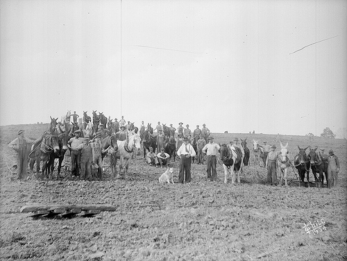 Large group of men and boys and a dog with mules hitched to plows, standing in a huge field, no date (1920's-1930's). From the Dunn Area (Lewis White Studio) Photo Collection, PhC.121, North Carolina State Archives, Raleigh, NC, call #: PhC.121-45.