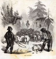 """Hog drovers in western North Carolina. Illustration from Harper's New Monthly Magazine , October 1857."" Image cnline from LearnNC."