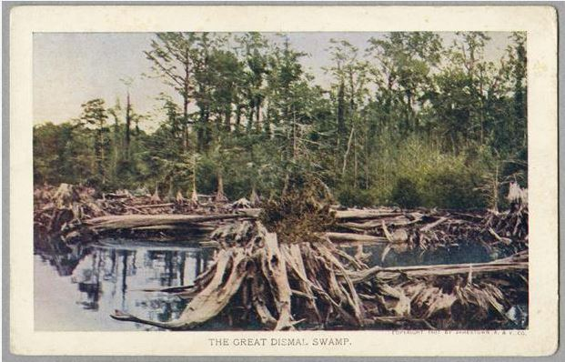 """The Great Dismal Swamp,"" postcard by The Jamestown Amusement & Vending Company. Item H.1954.9.1, from the collections of the N.C. Museum of History.  Used courtesy of the N.C. Department of Cultural Resources."