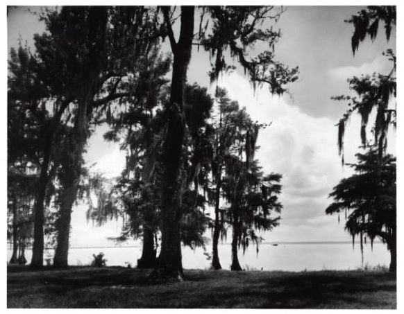 Colorized print of Lake Waccamaw, ca. 1940-1960. Item H.1961.94.179 from the collection of the North Carolina Museum of History.