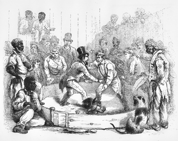 Cockfight in eastern North Carolina, ca. 1857. North Carolina Collection, University of North Carolina at Chapel Hill Library.