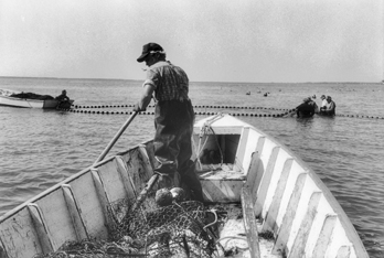 Fisherman poling his boat to a net in Back Sound in Carteret County, 1992. Copyright Edwin Martin, 1992. North Carolina Collection, University of North Carolina at Chapel Hill Library.