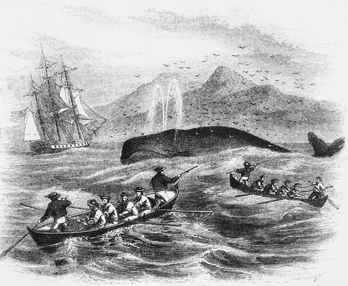 An 1856 engraving from Harper's Monthly showing small whaling boats similar to those launched by crews off the Outer Banks in the nineteenth century. UNC-Chapel Hill Library.