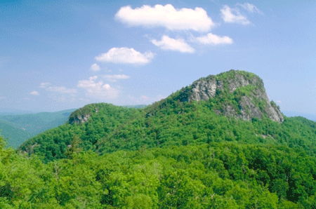 A tree-covered mountain top in the Pisgah National Forest