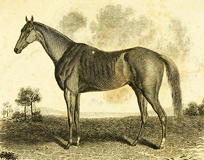 An engraving published in 1837 of the racehorse John Bascombe, owned by John Crowell. Based on a painting by Edward Troye. Image from the Internet Archive.
