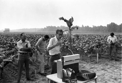 """Extension professor, Furney A. Todd, lecturing in a tobacco field."" Black and white print photograph, circa 1970 to 1979.  Item ID 0016834, Univeristy Archives Photographs, Living Off the Land, Special Collections Research Center, North Carolina State University Libraries.  Used by permission."